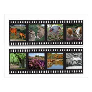 New Forest filmstrip postcard