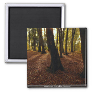 New forest, Hampshire, England Magnet