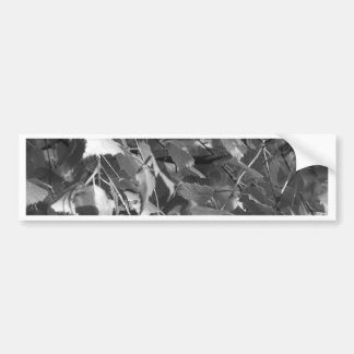new forest leaves bumper sticker