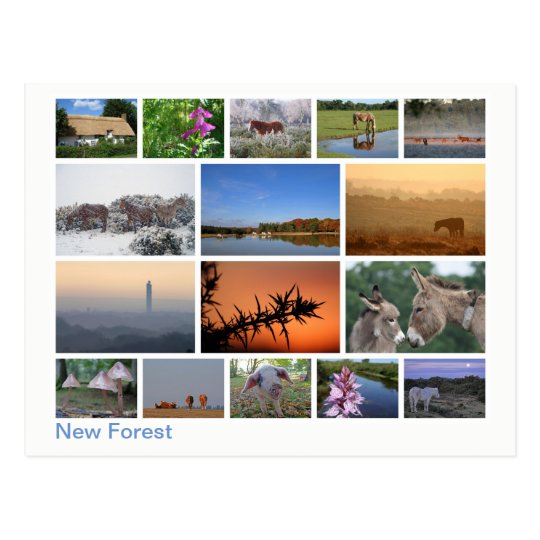 New Forest multi-image 2 Postcard