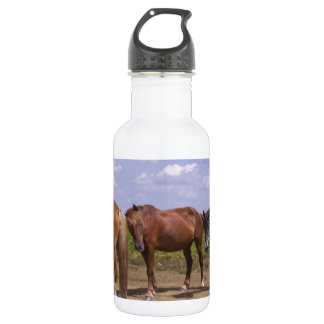New Forest Ponies 532 Ml Water Bottle