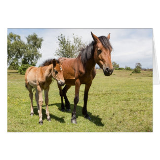 New Forest Ponies - Blank Greeting Card