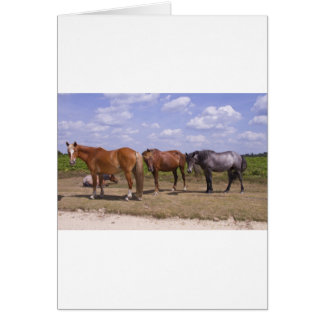 New Forest Ponies Card