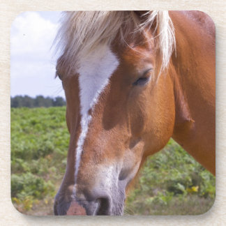 New Forest Ponies Coasters