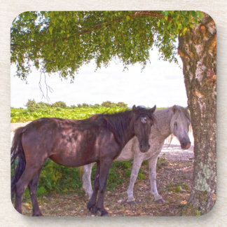 New Forest Ponies Drink Coasters