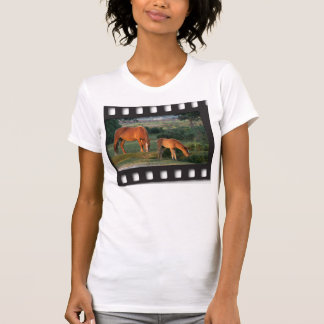 New Forest ponies filmstrip shirt