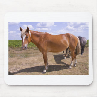 New Forest Ponies Mouse Mat