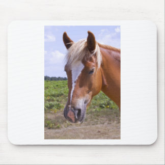 New Forest Ponies Mouse Mats