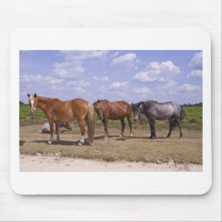 New Forest Ponies Mousepad