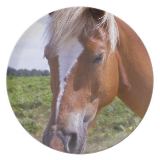 New Forest Ponies Dinner Plates