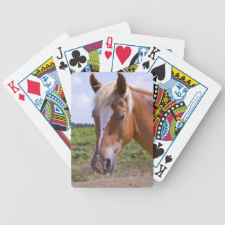 New Forest Ponies Poker Deck