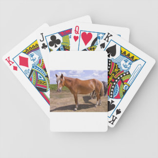 New Forest Ponies Card Deck