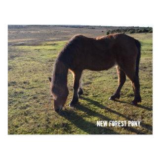 New Forest Pony2 Postcard