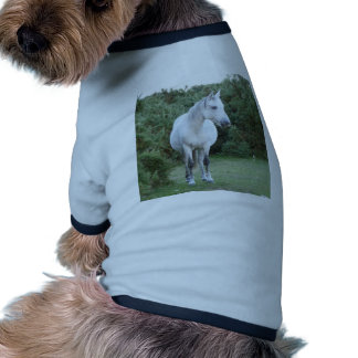 new forest pony pet clothing