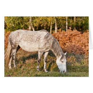 New Forest Pony - Greeting Card Cards