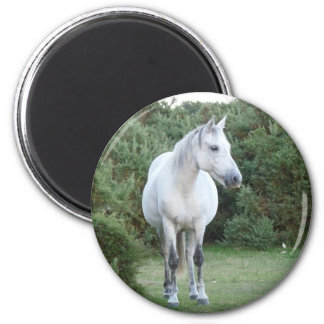 new forest pony magnet