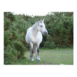 new forest pony post cards