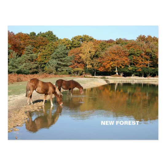 New Forest Postcard