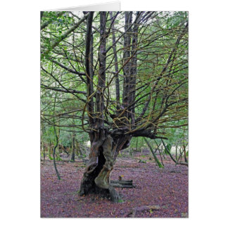 New Forest Tree CARD