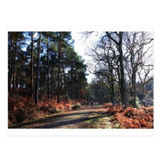 new_forest_walk.JPG Postcard