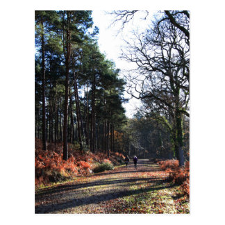 new_forest_walk.JPG Postcard