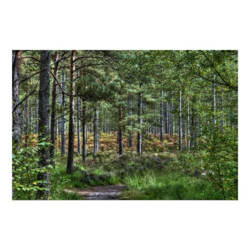 New Forest Woodland Trees Nature Scene, England Poster
