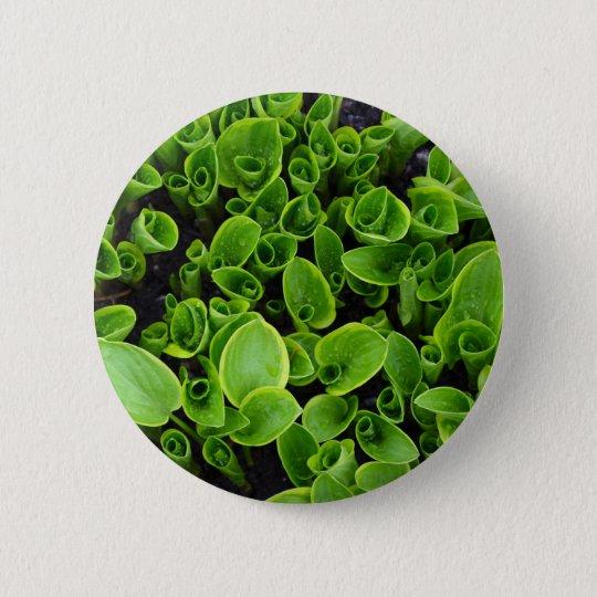 New green hosta plants in garden 6 cm round badge
