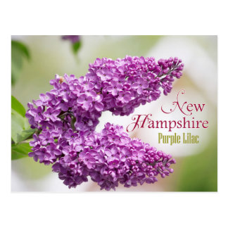 New Hampshire State Flower: Purple Lilac Postcard