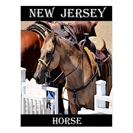 New Jersey Horse Postcard