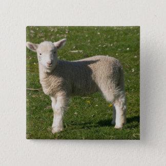 New Lamb, near Dunedin, South Island, New 15 Cm Square Badge