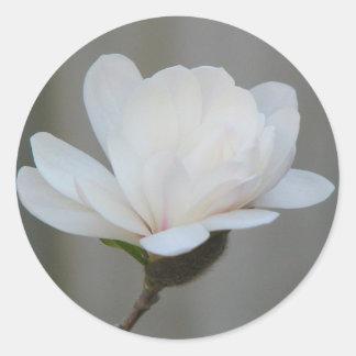 New Magnolia Centennial Bloom Classic Round Sticker