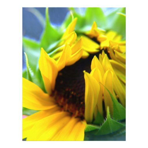 New Mexico Sunflower 21.5 Cm X 28 Cm Flyer