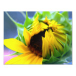 "New Mexico Sunflower 4.25"" X 5.5"" Invitation Card"