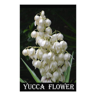 New Mexico Yucca Flower Stationery Paper