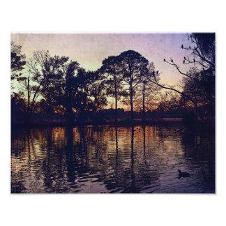 New Orleans Audubon Park Photographic Print