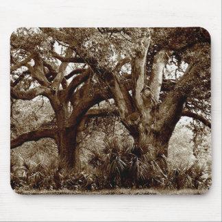 New Orleans Live Oak Trees Mouse Mat