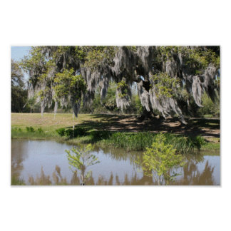 New Orleans willow tree lake Poster