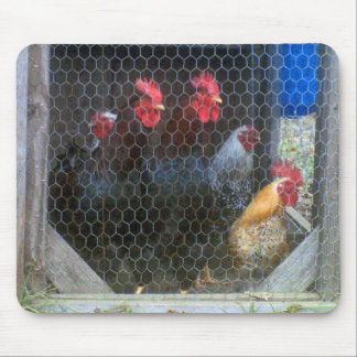 New Roosters in the Coop Mouse Pads