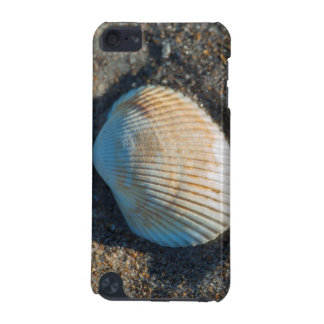 New Smyrna Beach, cockle shell iPod Touch 5G Cases