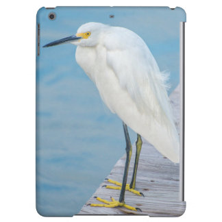 New Smyrna Beach, Snowy Egret on dock