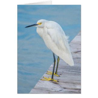 New Smyrna Beach, Snowy Egret on dock Card