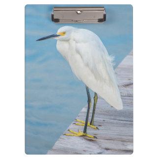 New Smyrna Beach, Snowy Egret on dock Clipboard