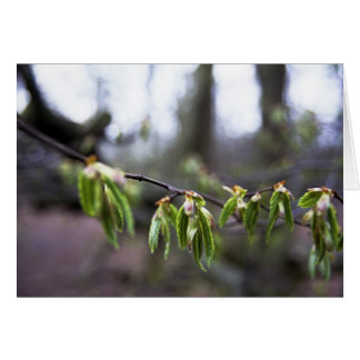 New Sprouting Leaves Card