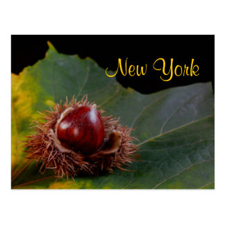 New York, Autumn Leaf With Nut Postcard
