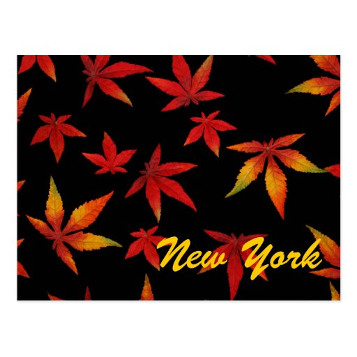 New York Autumn Leaves Postcard
