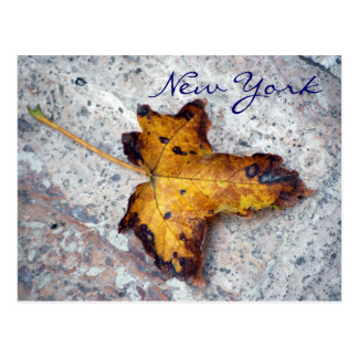 New York, Leaf On Stone Postcard