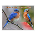 New York State Bird - Eastern Bluebird Postcard