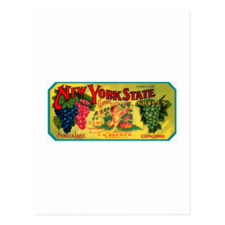 New York State Grapes Postcard