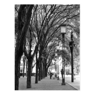 New York Tree Lined Walk Postcard