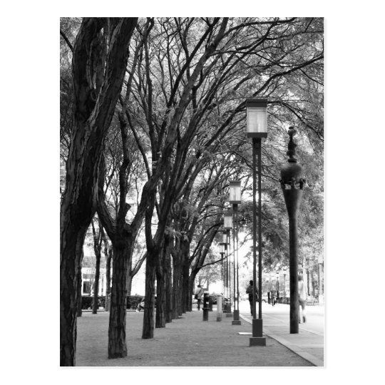 New York Tree Lined Walk Postcard